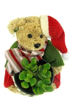 Very Beary Christmas - Standard