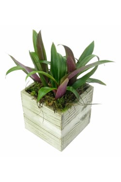 Green Up Plant Trio - Standard