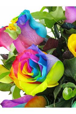 All The Pretty Colours - Standard