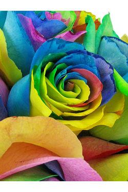 So Fancy - Rainbow Roses - Deluxe