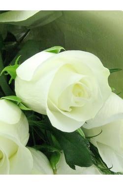 White Roses - Standard