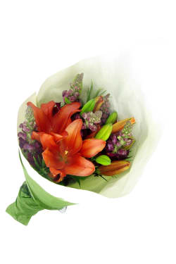 Snapdragons and Lilies - Standard