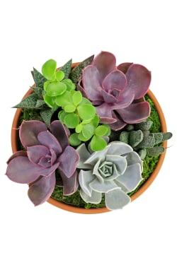 Succulent Garden - Baked Earth - Standard