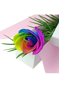 Single Rainbow Rose - Standard