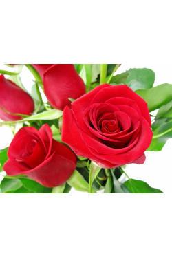 Valentine's 6 Red Rose Vase - 6 Roses (Half Dozen)