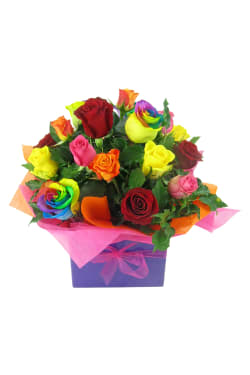 Lollipop Roses - Standard