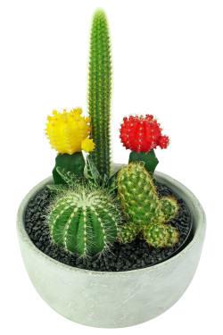 Painted Desert Cactus Garden - Standard