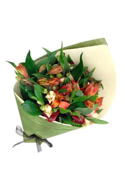 Alstroemeria Bloom - Standard