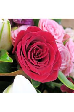 Love In Bloom - Standard