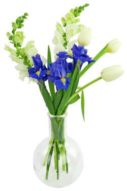 Spring Serenade - Standard