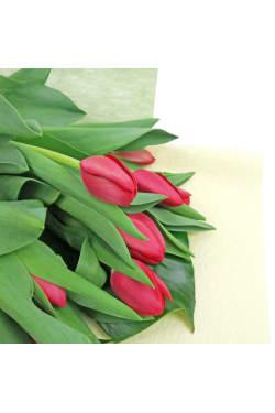 Tulips - Standard