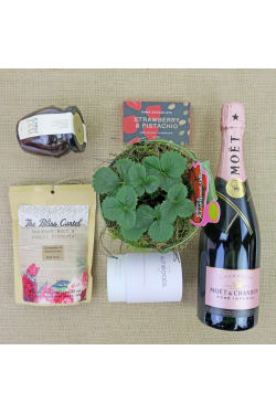 Strawberries & Champagne - Standard