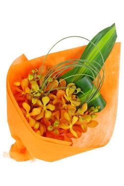 Orange Nectar - Standard