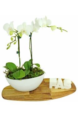 Orchid Duet - Standard