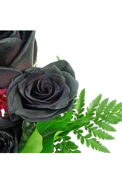 My Gothic Romance - Standard