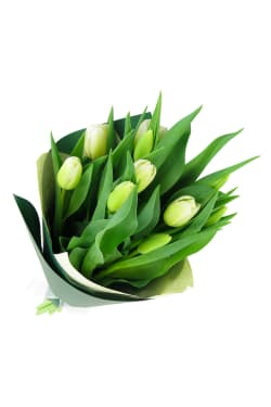 White Tulip bunch - Standard