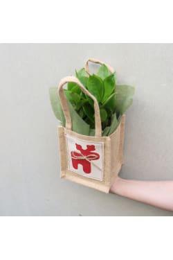 Festive ZZ Plant - Standard