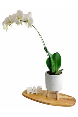Ribb Cylinder Orchid - Standard