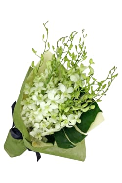 White Orchid Bunch