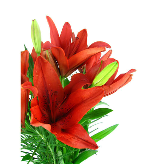 Lilies in a Vase - Standard