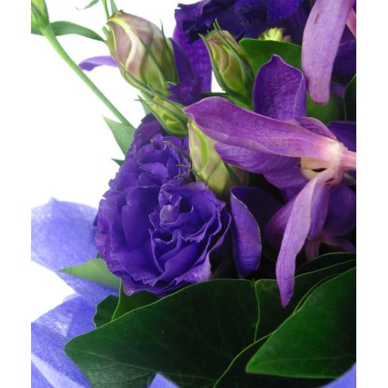 Purple Haze - Standard