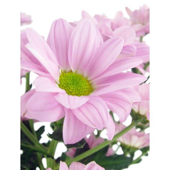 Chrysanthemum Vase - Standard