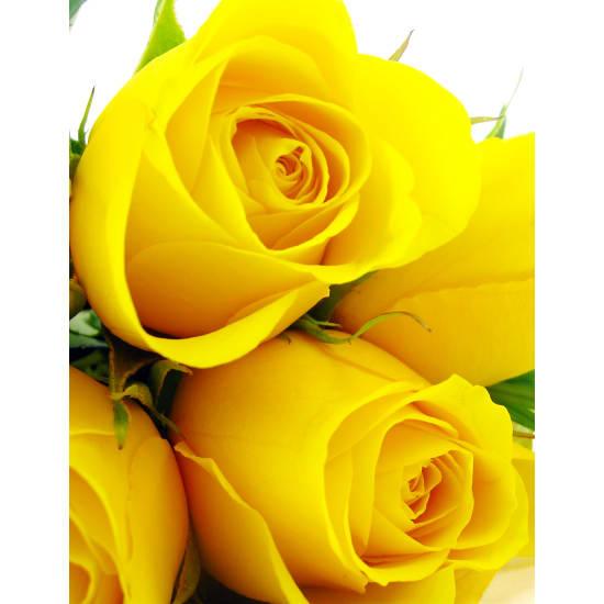 Yellow Roses - Standard