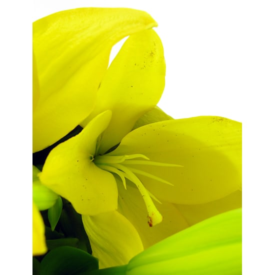 Yellow Lily Bunch - Standard