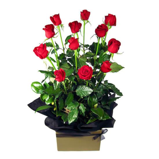 Presentation - 12 Roses (One Dozen)