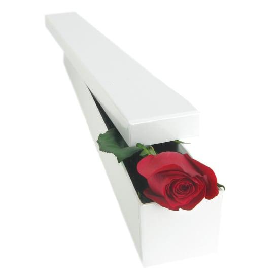 Single Elegant Rose - Standard