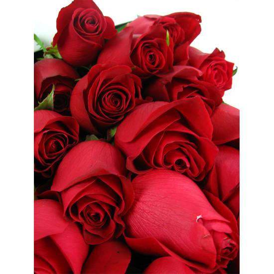24 Elegant Roses - 24 Roses (Two Dozen)