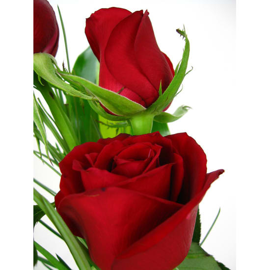 Valentine's 3 Roses in a vase - Standard