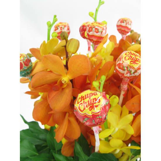 Lollipop Delight - Standard
