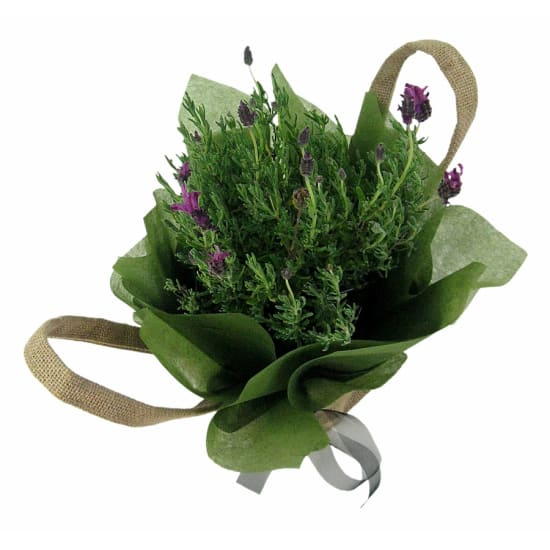 Fields Of Provence Lavender - Standard