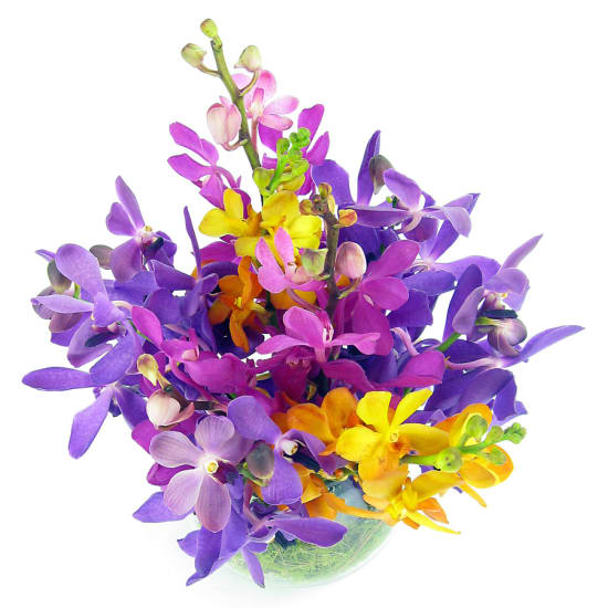 Orchid Fishbowl - Standard