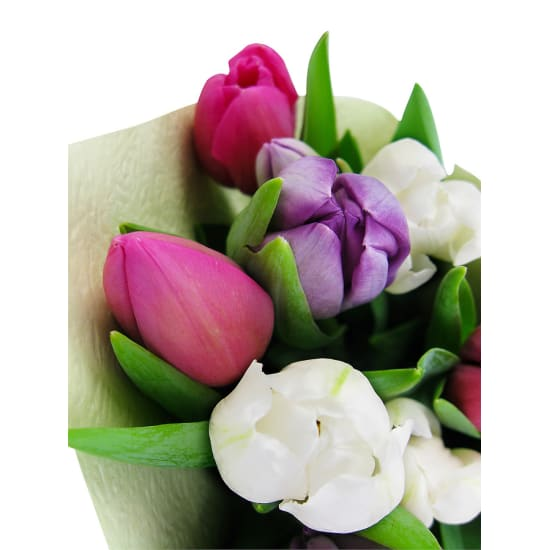 Tulips Pastel Mixed - Standard