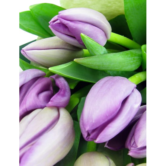 Purple Tulip Bunch - Standard