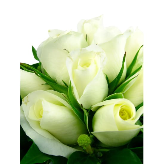 White Rose Vase - Standard