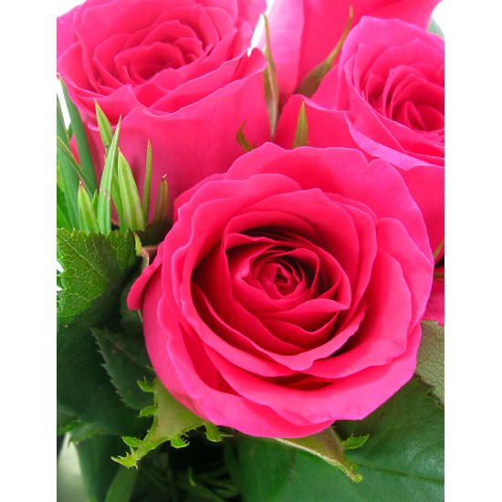 Pink Roses - 6 Roses (Half Dozen)