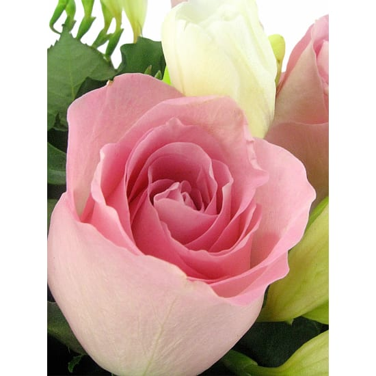 Roses and Freesias Vase - Deluxe