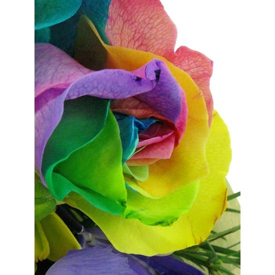Colourburst - Standard