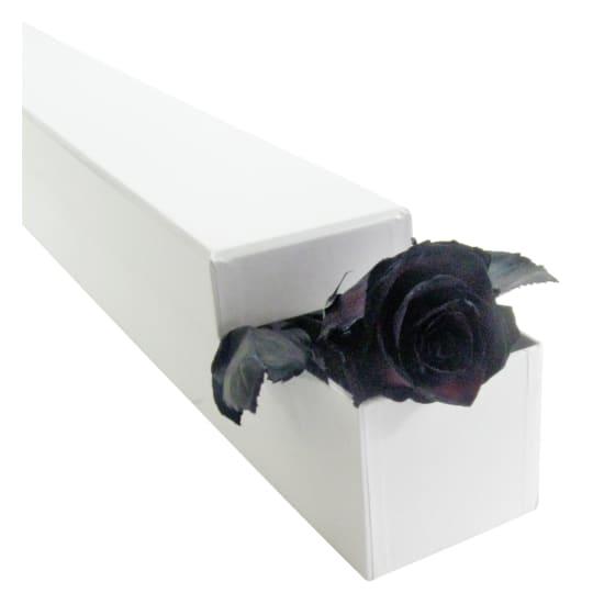 Rose Noire! - Standard