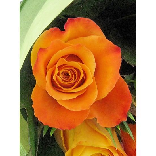 Orange Roses - 12 Roses (One Dozen)
