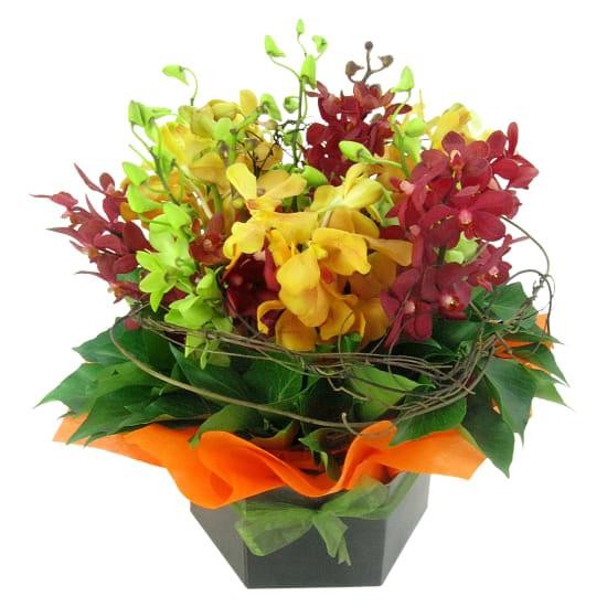 Orchid Garden - Standard
