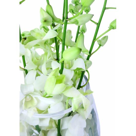 Elegant Orchids - Standard