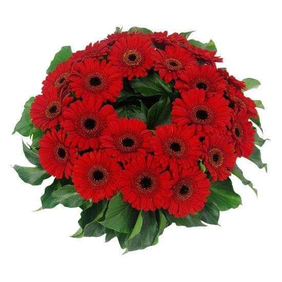Daisy Chain Wreath - Standard