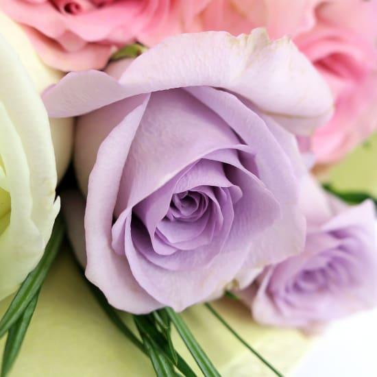 Pastel Roses - 12 Roses (One Dozen)