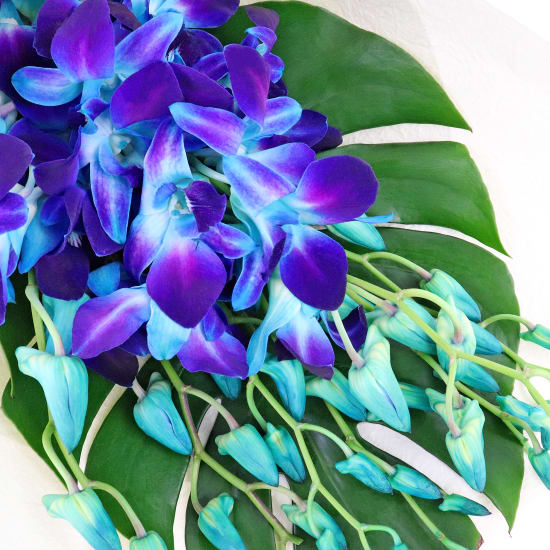 Blue Orchid Bunch - Standard