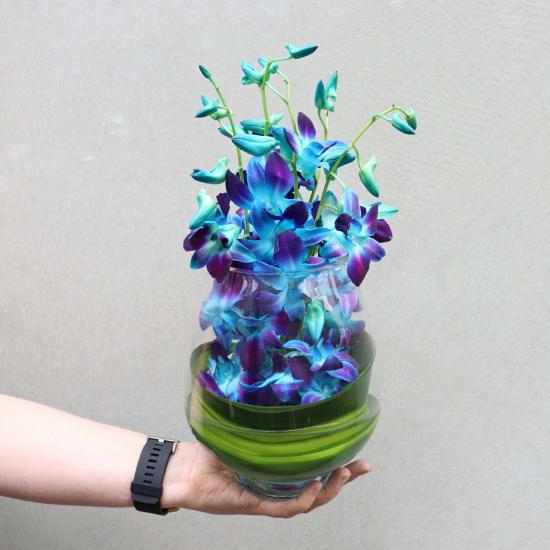 Blue Elegant Orchids - Standard