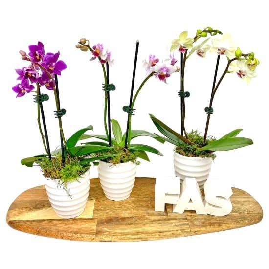 White Ceramic Mini Orchid - Standard